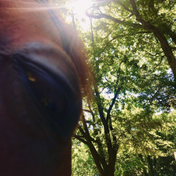 dd eyes horse oudoors photography summer animals love