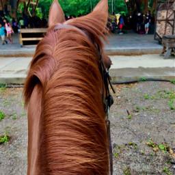 dd horse cute oudoors animals nature