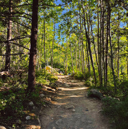 freetoedit forest woods path trees sky hike nature wilderness green blue brown dirt leaves wood photography wyoming hiking explore aesthetic exploring travel rock rocks