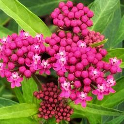 photo flower pink freetoedit