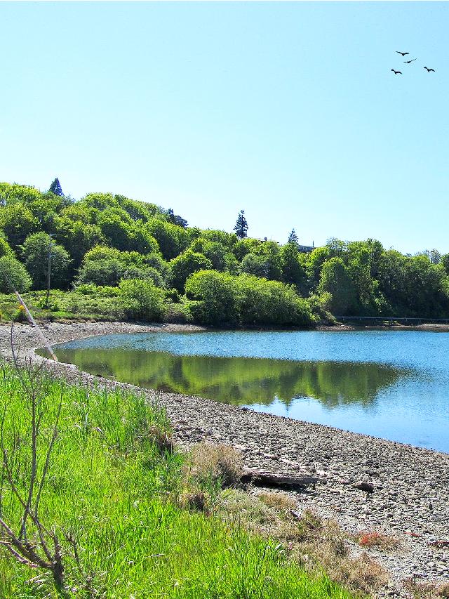 #nature #naturelover #outdoors #lake #remixed from @davidrifenburg