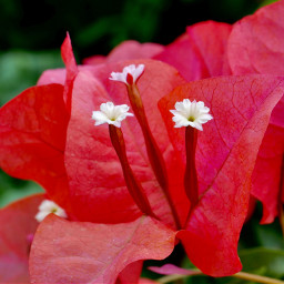 freetoedit red flower macro