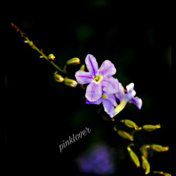 photography flowerphotography flowers lovenature naturephotography flowerporn love💕💕💕 love
