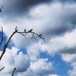 clouds cloudsandsky tree nature birds pcskyandclouds skyandclouds