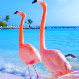 freetoedit desafio challenge summer verao praia beach flamingos srcsearchingfor searchingfor