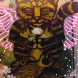kitten zen freetoedit