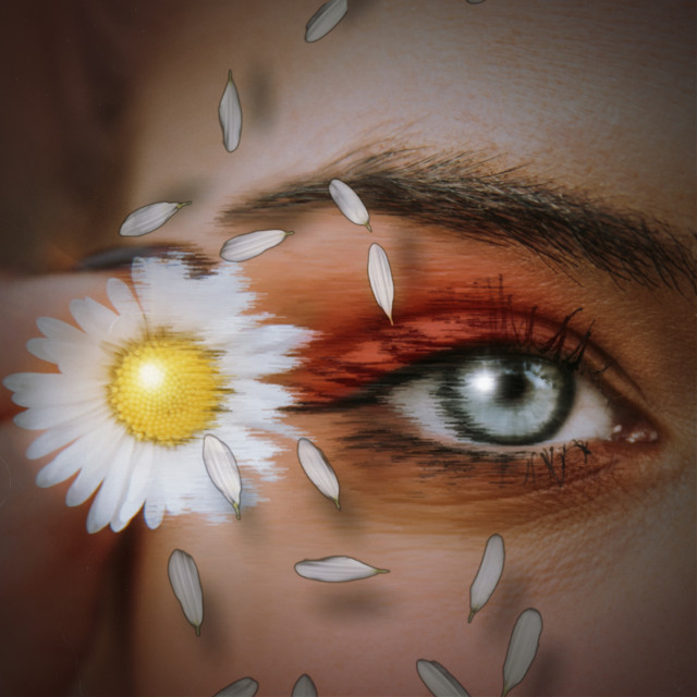 He loves me, he loves me not...🌼🍃🌿🍃 Will there be enough #petals to end with he loves me?   Anyway, #sheereffect around the #eye and #daisy a fun #edit using @edwincruz09 #replay edit. ☺️🌼🌿💚🍃 I used #squarefittool #stickers #magicbrushes and #filters #croptool too. #freetoedit