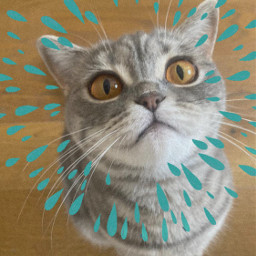 freetoedit picsart picsartedit competition rain cats animals catlover srcinacircle inacircle