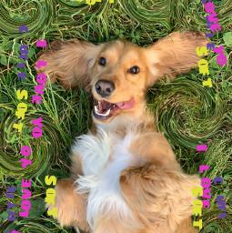 freetoedit dog besties