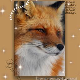 freetoedit fox foxedit animaledits tolerateit toleretitlyrics foxaesthetic