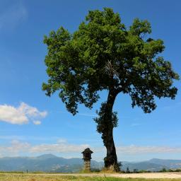 landscape bluesky mountains tree votiveaedicula appennines italy myphotography freetoedit