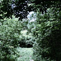 tree trees nature naturetrees leaves leavesandtrees leavesonthetrees filter aesthetic asthetic green greenaesthetic sky bluesky blueskyaesthetic blueandgreenaesthetic bushes backgrounds naturebackground backroundasthetic
