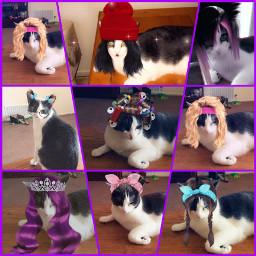 meow furbaby americus snapchatfilter