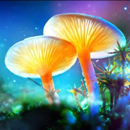 magicshroom