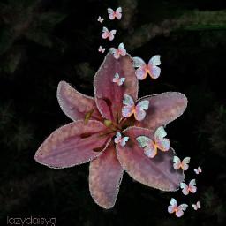 pink lilies butterflies freetoedit srcsparklybutterflies sparklybutterflies
