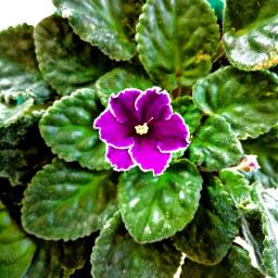 flower green purple freetoedit
