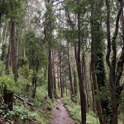 freetoedit hike trees trail nature foggyforest freeforbusiness