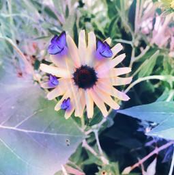 flower rainbow butterfly