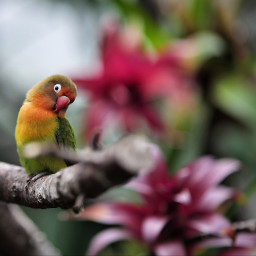 bird parrot colorful e-go flower freetoedit e