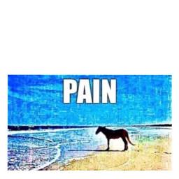 freetoedit meme memes format formats template templates memeformat memeformats memetemplate memetemplates pain painmeme horse