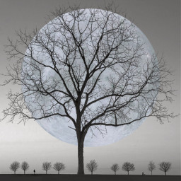 abstract surreal surrealart surrealism background wallpaper tree trees planet planets man boy standing alone ftestickers shadow shading shadoweffect freetoedit
