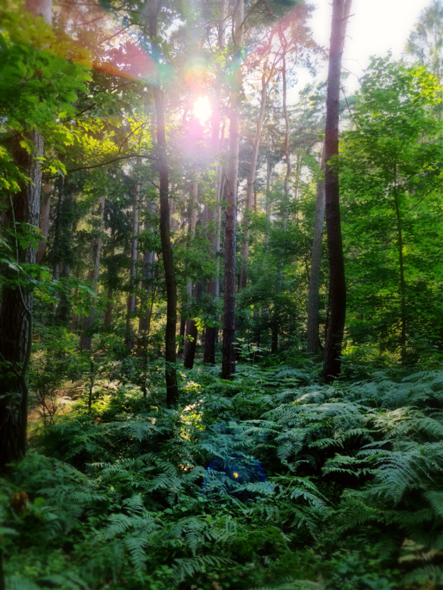 #summer #summervibes #sunlight #forest #wonderland #greenery #plants #ferns  #trees #sunnyday #summertime #beautifulnature #naturephotography #naturebackground