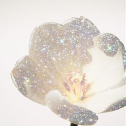 freetoedit glitter flowers heypicsart