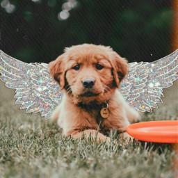 freetoedit dog wings glitter heypicsart