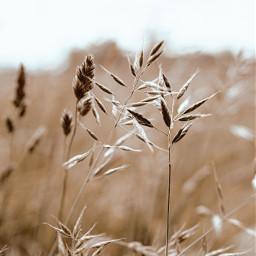 summer photography nature naturephotography beige cute vintage soft interesting art freetoedit