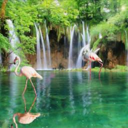 flamingo freetoedit eccuteflamingos cuteflamingos