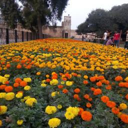 flowers freetoedit pcoutside outside