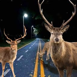 freetoedit animals deers night myedit street yellow