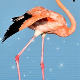 freetoedit flamingo