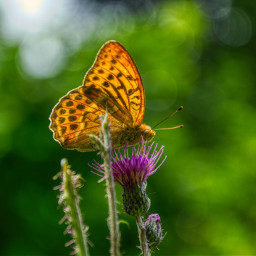 freetoedit photography nature summer holidays butterfly closeup bokeh insect