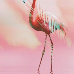 cuteflamingos cuteflamingoschallenge picsart picsartchallenge pink aesthetic flamingo freetoedit eccuteflamingos