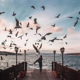 freetoedit birds sunset beach lanscape clouds gulfbird