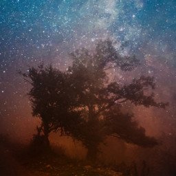 tree outerspace nature stardust doubleexposure freetoedit