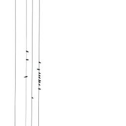 freetoedit white black blackandwhite birds wires