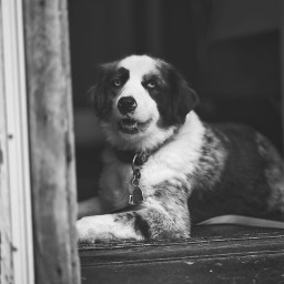 dog doorway streetphotography blackandwhite portraitphotography petsandanimals pup winchester 85mm sonya7iii