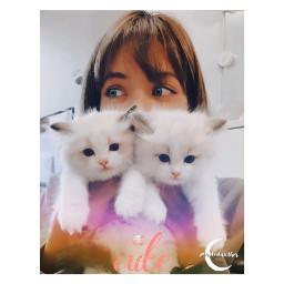 cats lisabp freetoedit