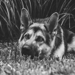 freetoedit photography photoshoot followme beautiful blackandwhite dog puppy