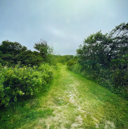 freetoedit path nature summer outside trees