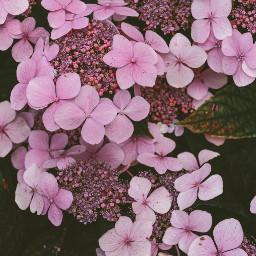 flower photography nature cute colorful naturephotography rosa interesting art vintage summer freetoedit