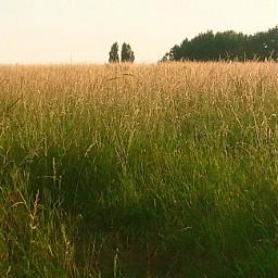 field freetoedit