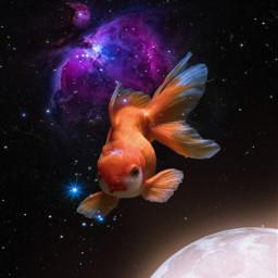 freetoedit space stars galaxy universe surreal surrealart moon planet goldfish fish ocean heypicsart picsartmaster unsplash ecseacreatures seacreatures
