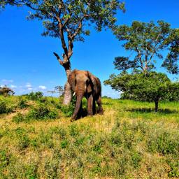 photography travel nature animal wildlife elephant freetoedit pcadaytoremember adaytoremember