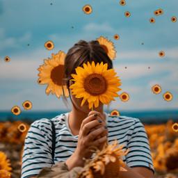 freetoedit interesting srcsunflowersplash sunflowersplash