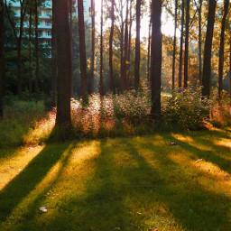 trees sunrise freetoedit