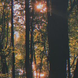freetoedit trees glare water sun filter atmosphere picsart photo photography redmi redminote9pro phone