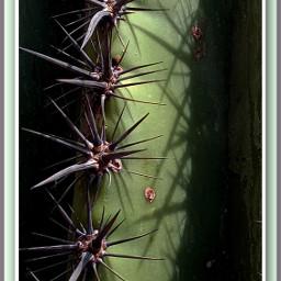 photobyjaz cactus saguaro desert freetoedit